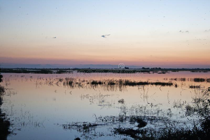 在CHOBE河的软的残光日落颜色 库存图片