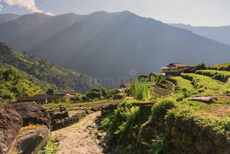 在Chomrong村庄安纳布尔纳峰保护区域,尼泊尔的日出 库存图片