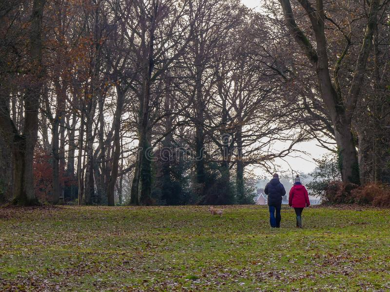 在Chorleywood共同性的狗走的夫妇在冬天,赫特福德郡 库存照片