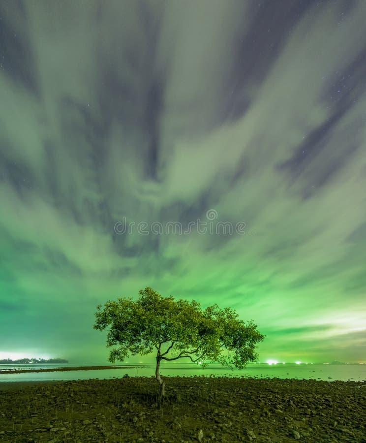 在Chumphon海滩,春蓬府嘴的一棵树  库存图片