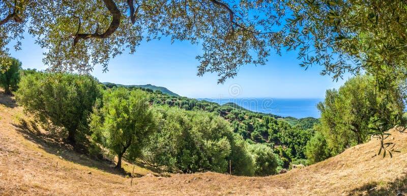 在Cilentan海岸的美好的沿海风景,褶皱藻属,意大利 库存图片