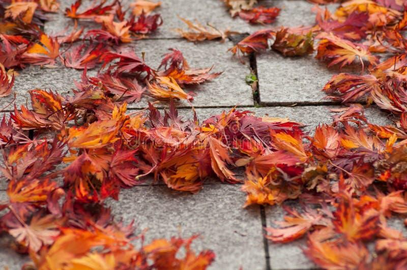 在cobbelstone的秋季枫叶在街道 图库摄影