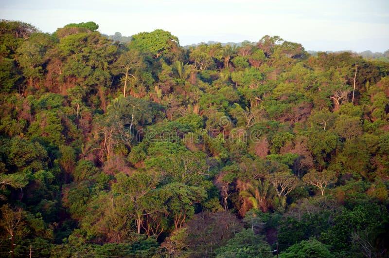 在Cocoli锁附近的风景,巴拿马运河 免版税库存图片
