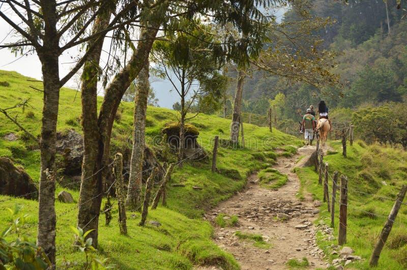 在Cocora谷,哥伦比亚的马骑术 免版税图库摄影