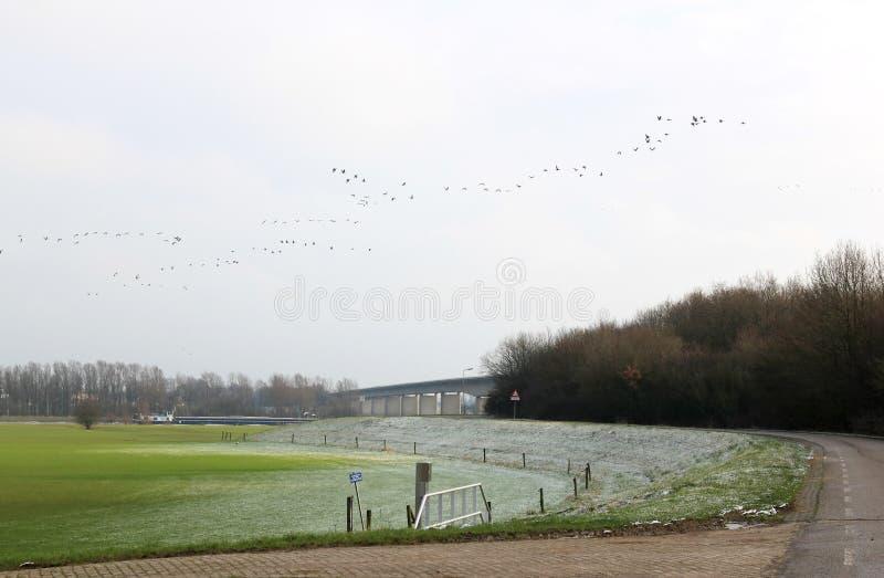 在Cortenoeversebrug,聚特芬附近的结霜的洪泛区 库存照片