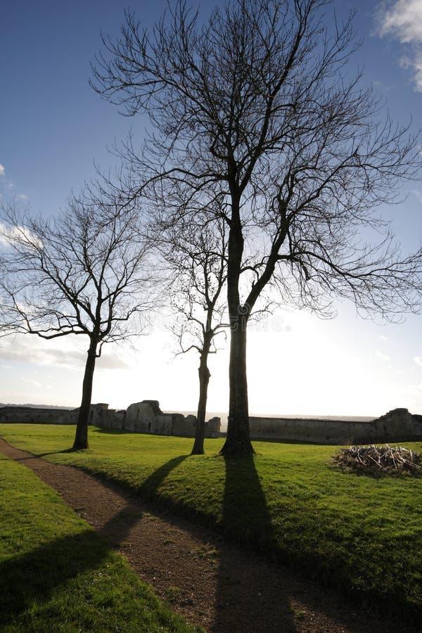 在Coucy le大别墅的树 免版税库存照片