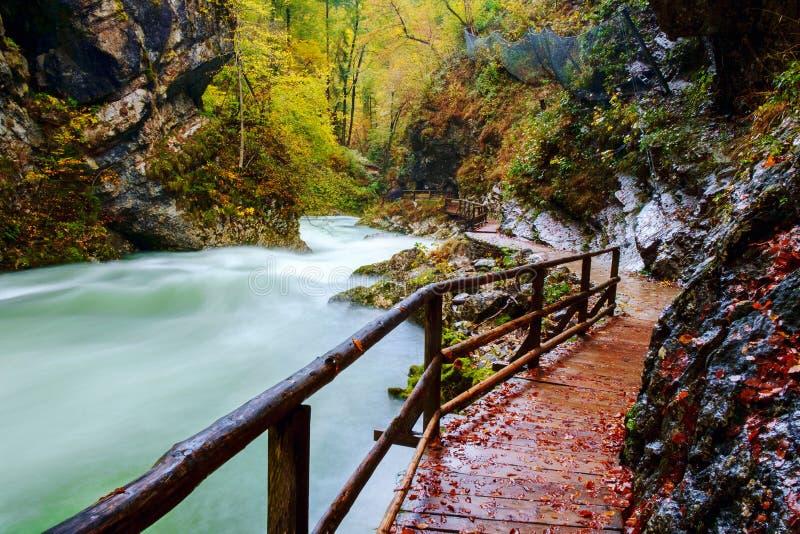 在curlicue河和美丽的a的美妙的Vintgar峡谷峡谷 图库摄影