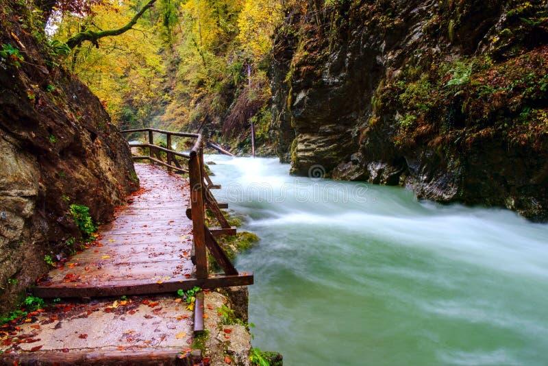 在curlicue河和美丽的a的美妙的Vintgar峡谷峡谷 库存照片