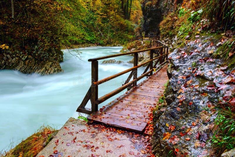 在curlicue河和美丽的a的美妙的Vintgar峡谷峡谷 免版税库存图片
