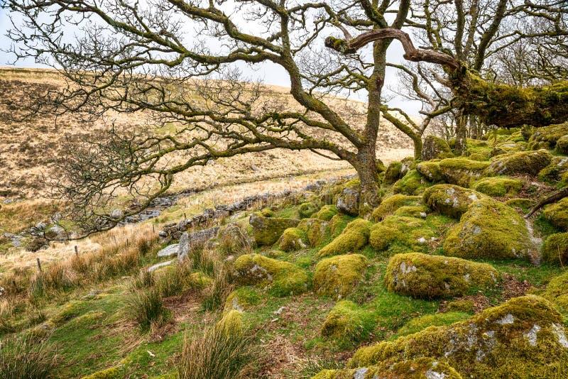 在Dartmoor的Wistman的木头 免版税库存图片