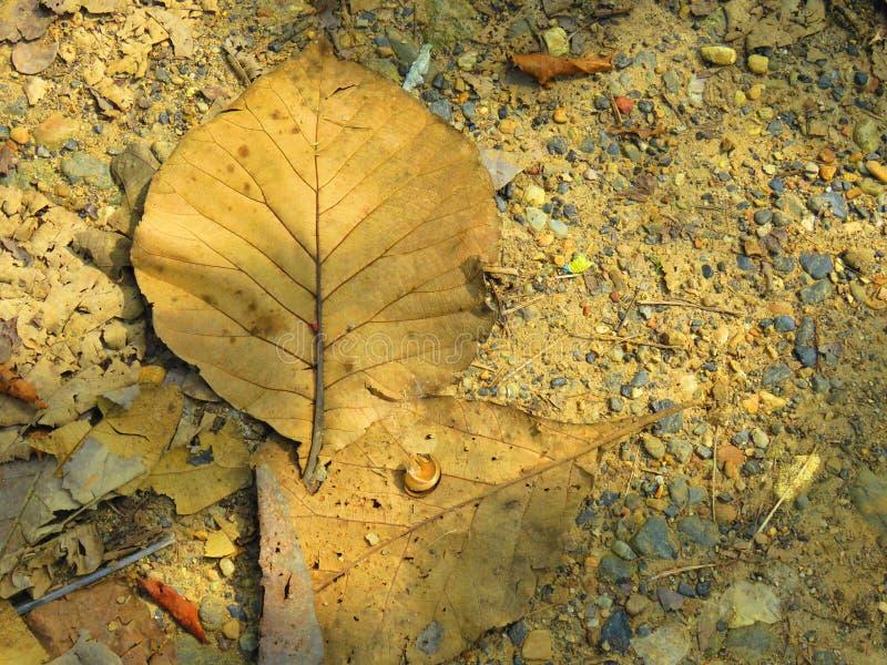 在de floor的干燥叶子 免版税图库摄影