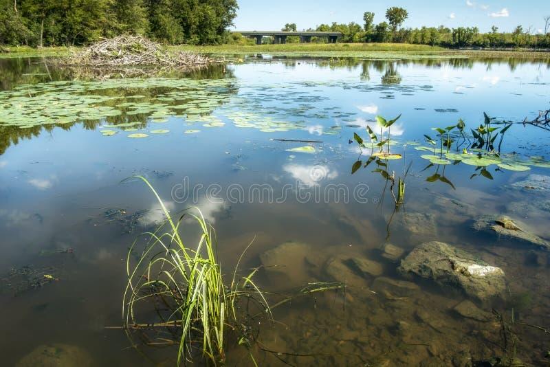 在Des米莱斯Iles河的自然风景 免版税库存图片