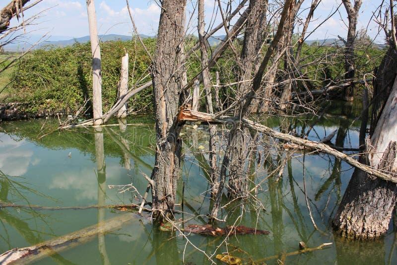 在Doirani基尔基斯州希腊湖的被放弃的树  免版税库存图片