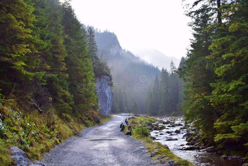 在Dolina Koscieliska谷2的早晨 免版税库存照片