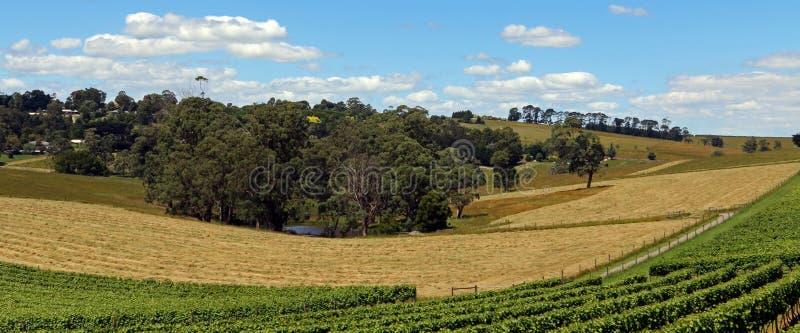 在Drouin和Warragul之间的葡萄园在澳大利亚 免版税库存图片