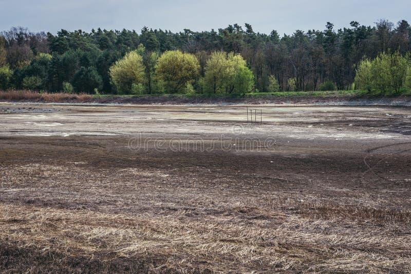 在Dubnany附近的森林 库存图片