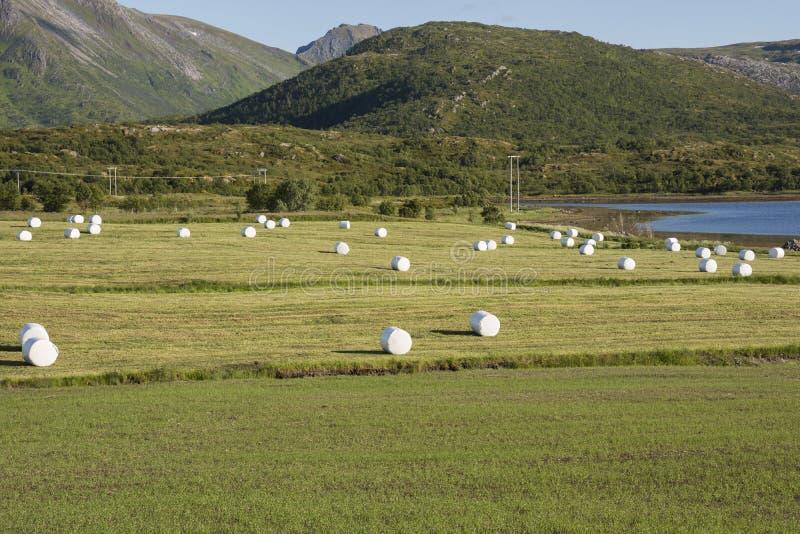 在Eggum的干草捆在挪威 库存照片