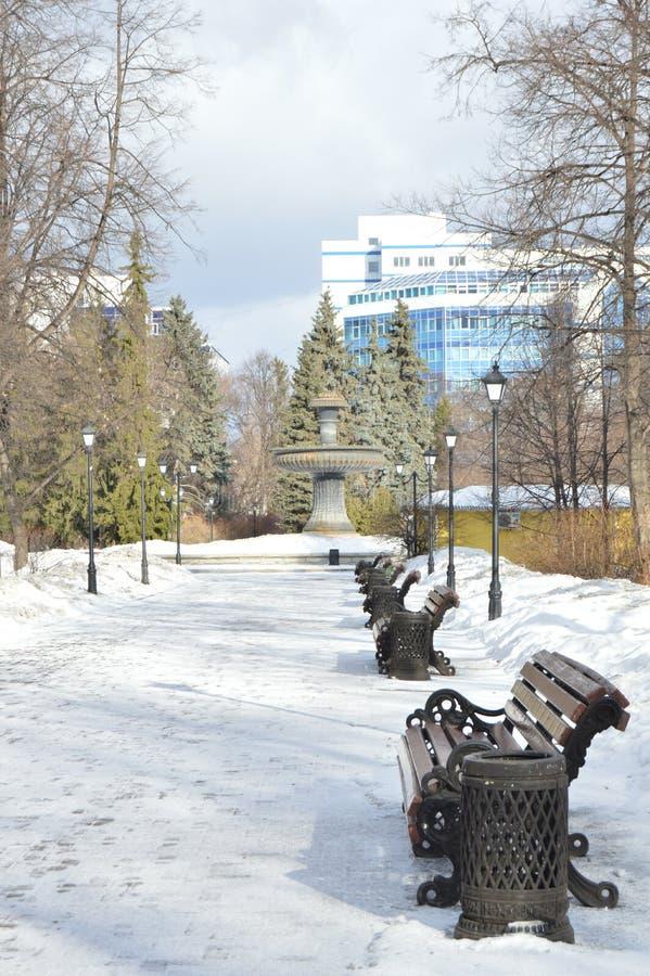 在Ekaterinburgs公园的树 库存图片