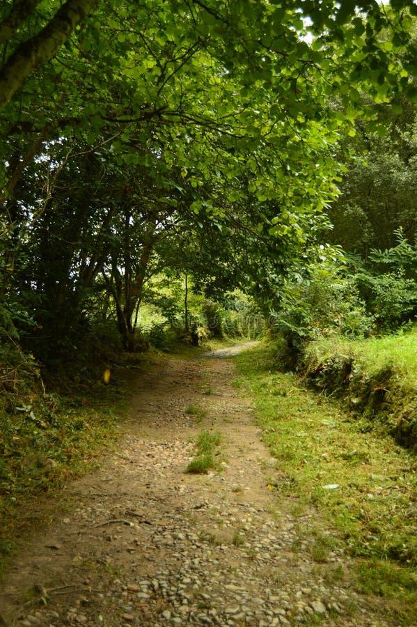 在Encantau Camin的路线的意想不到的扔石头的道路在利亚内斯中委员会  自然,旅行,风景,森林,幻想 免版税库存图片