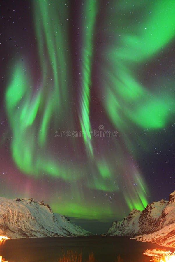 在Ersfjorden的极光Borealis,特罗姆瑟,挪威 免版税图库摄影