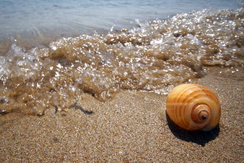 在Farangas,帕罗斯岛海滩的新近地被捉住的壳  库存照片