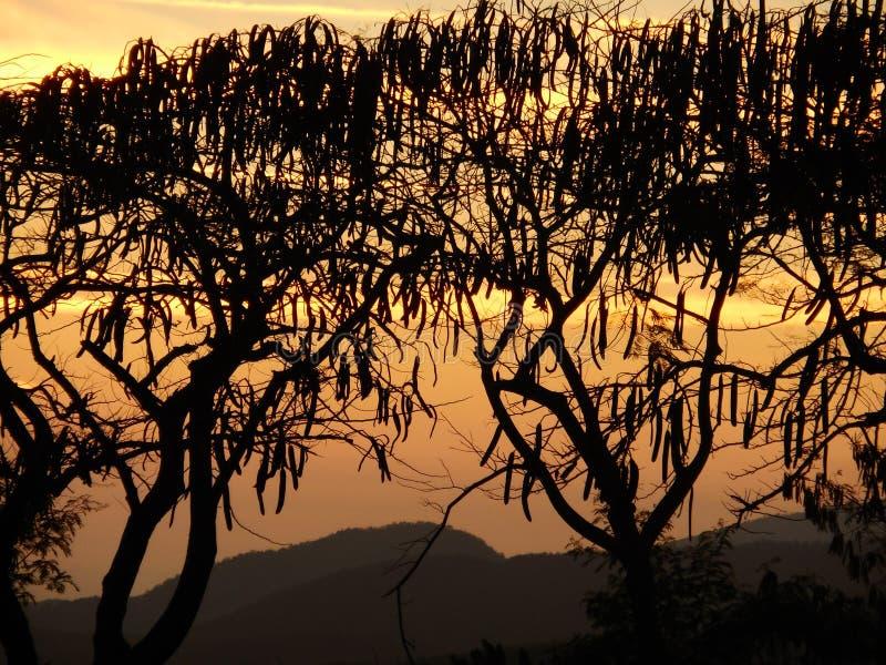 在FLAMBOYANTS的日落 图库摄影