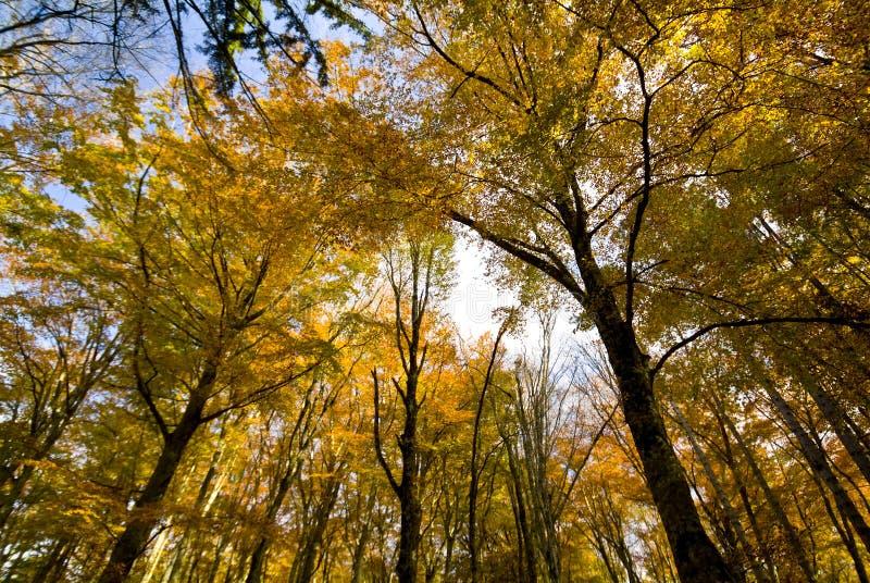 在Foresta本影的秋天, Gargano,普利亚,意大利 图库摄影
