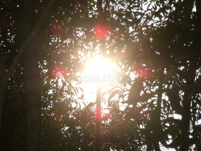 在Forrest里面的惊人的阳光 库存图片