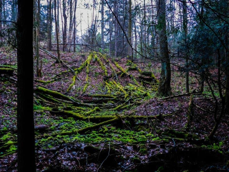 在Forst的下落的树 免版税库存图片