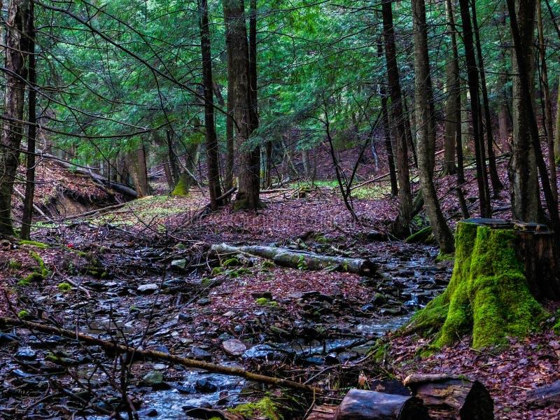 在Forst的小河 库存照片