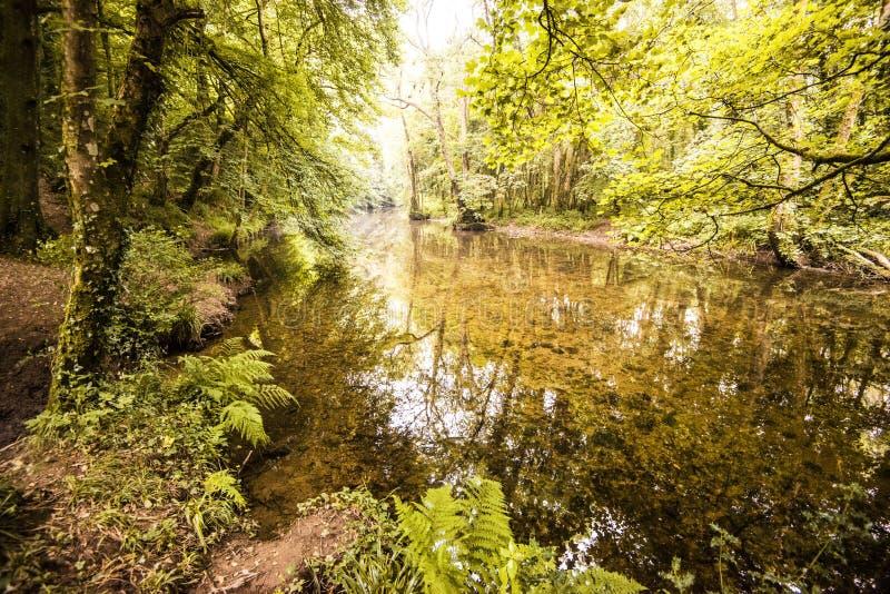在Gara桥梁的一个惊人的森林地场面在德文郡,英国 库存照片