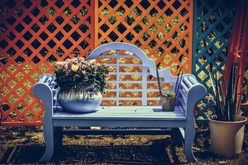 在gardenï ¼ ŒBonsai的白色狂放的菊花在一把蓝色椅子 向量例证