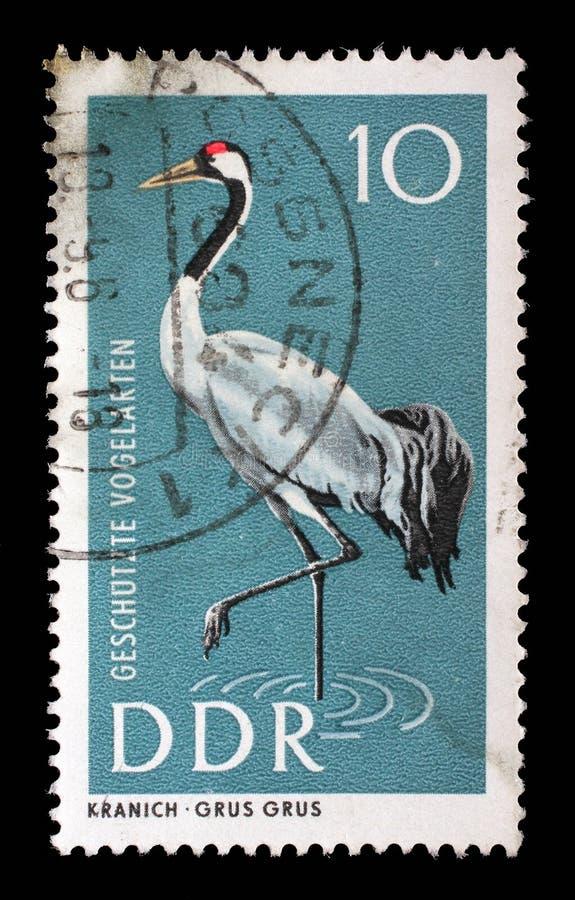 在GDR打印的邮票显示共同的起重机 库存图片