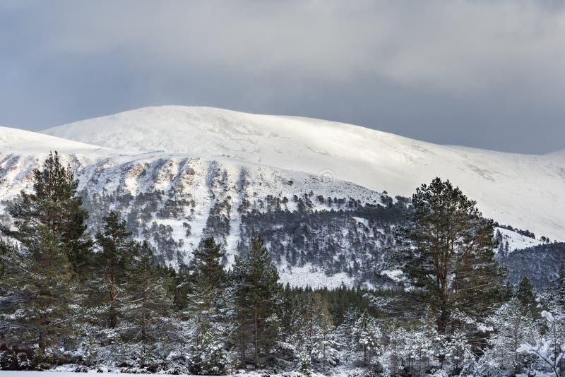 在Geal Charn的雪在苏格兰的凯恩戈姆山脉国立公园 免版税库存图片