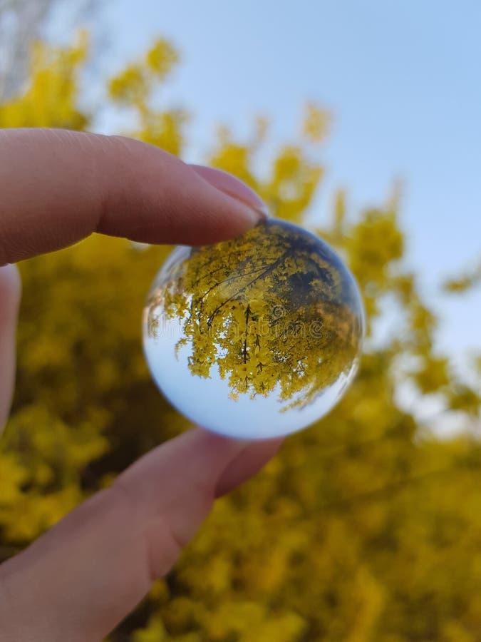 在glassbowl的黄色花 免版税库存图片