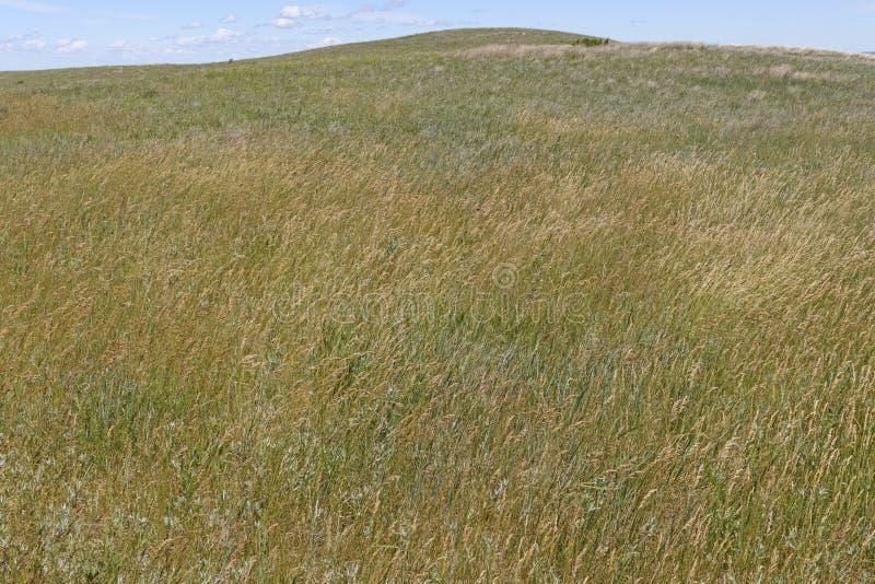 在Great Plains的大网茅草 免版税库存照片