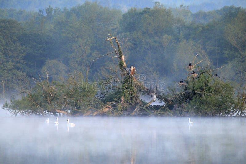 在Groby水池的清早薄雾 库存图片