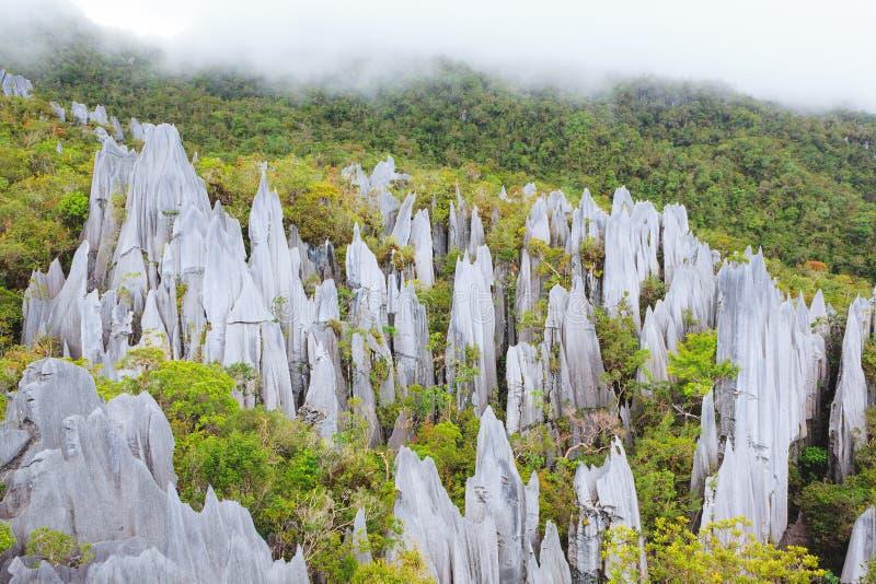 在gunung mulu国家公园的石灰石石峰 库存图片