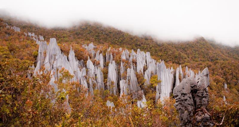 在gunung mulu国家公园的石灰石石峰 库存照片
