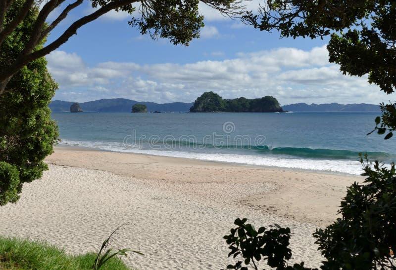 在Hahei镇,新西兰的一个美丽的海滩 库存图片