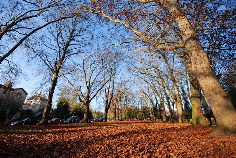 在Hampstead荒地,伦敦,英国的秋天 库存照片