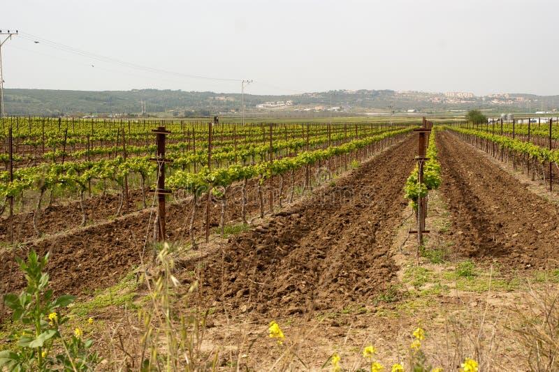 在Hanadiv谷,以色列的被犁的犁沟 免版税图库摄影