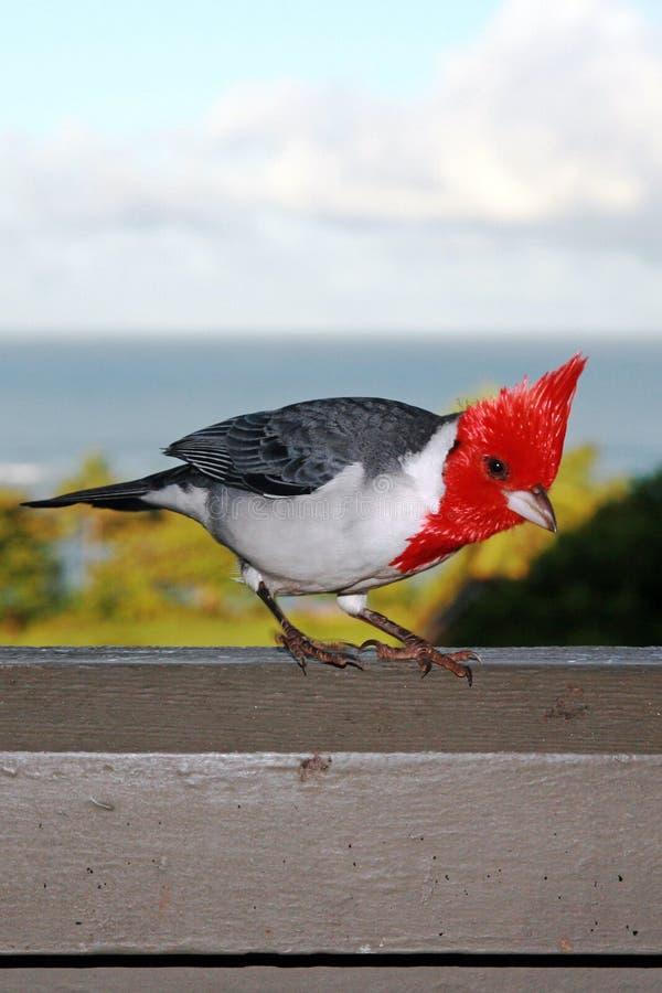 在Hanalei海湾考艾岛夏威夷上的红色有顶饰主教 图库摄影