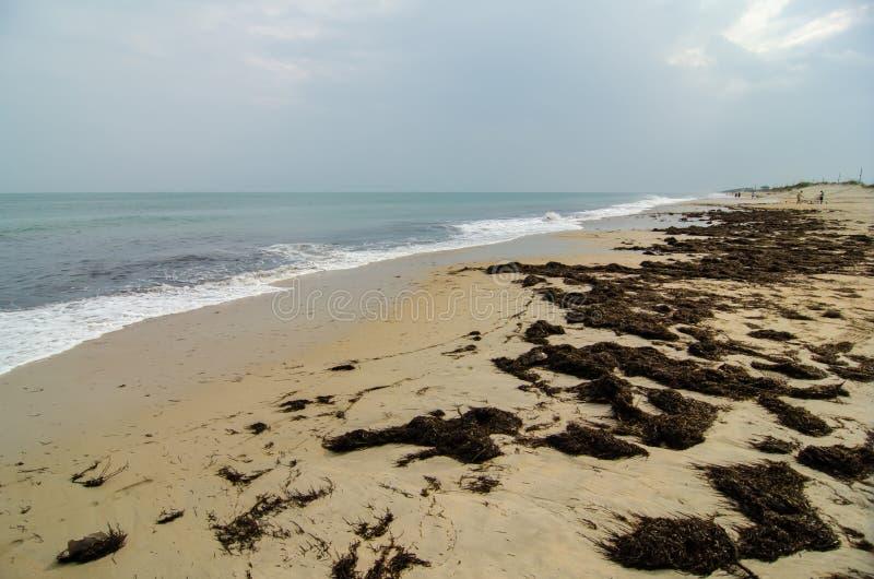 在Hatteras海岛北部Carolin上的哈特拉斯角全国海滨 库存照片