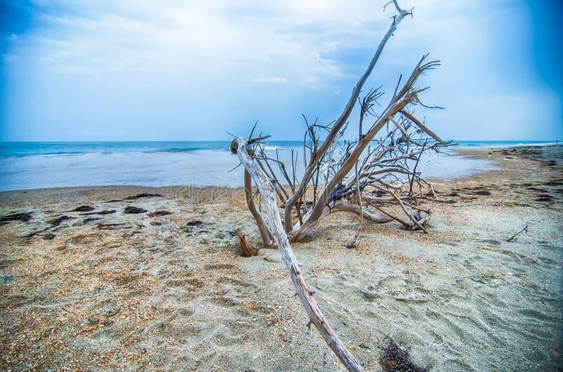 在Hatteras海岛北部Carolin上的哈特拉斯角全国海滨 免版税图库摄影