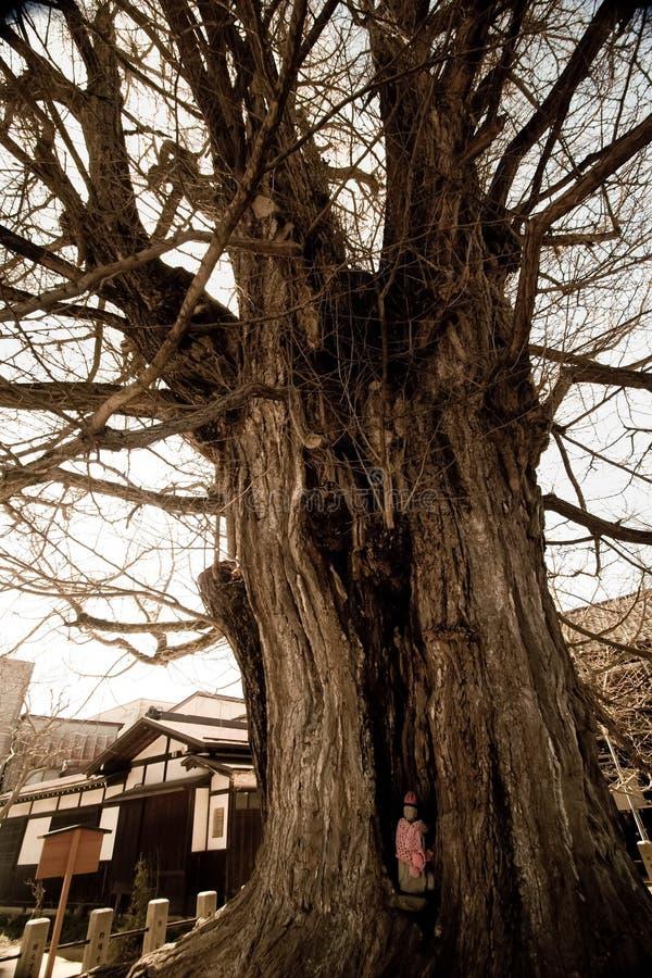 在Hida国分寺市寺庙的老树 库存照片