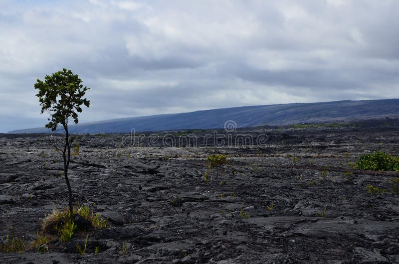 在Hilo的风景火山岩床 免版税库存照片