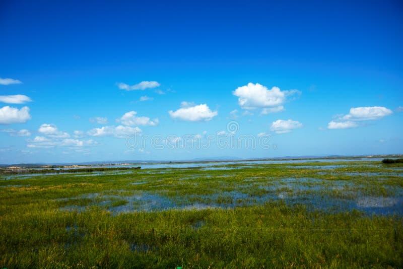 在hulunbeier津贴草原的夏天洪水2013年 库存照片