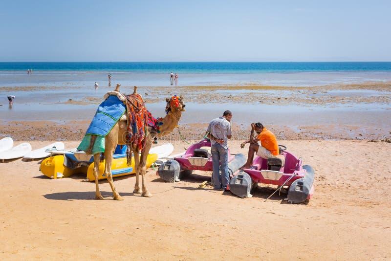 在Hurghada海滩的人提供的骆驼乘驾  免版税库存图片