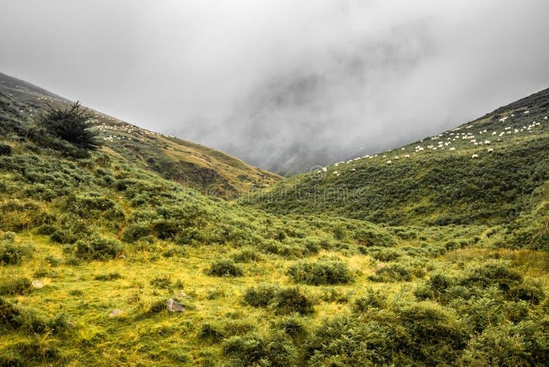 在Iraty山夏令时,巴斯克国家,法国的风景风景 免版税库存图片